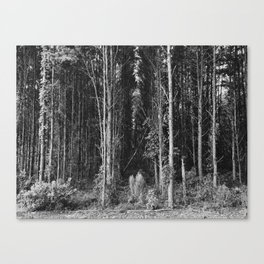 Nature Perspective Canvas Print