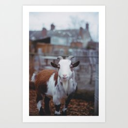 Hello, this is Goat Art Print