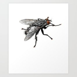 Pretty Giant black Fly with Bristles Art Print