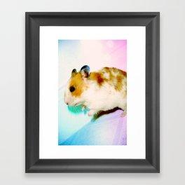 Pixi the Hamster Framed Art Print