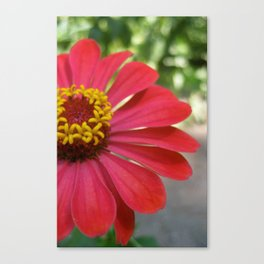 The Flower of the Garden Canvas Print