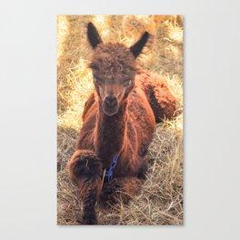 Llama Tude Canvas Print