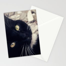 Portrait of a Cat: Socks Stationery Cards