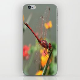 Red Skimmer or Firecracker Dragonfly With Lantana Background iPhone Skin