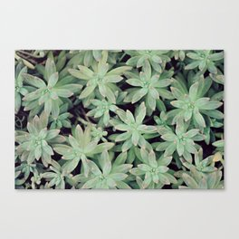 Succulent Abstract Canvas Print