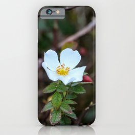 flowering in winter iPhone Case