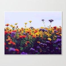 flower field II Canvas Print