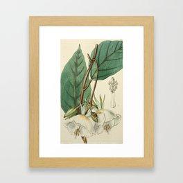 Edwards' Botanical Register Framed Art Print