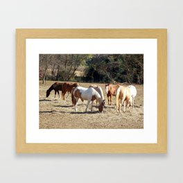 Horses out to pasture Framed Art Print