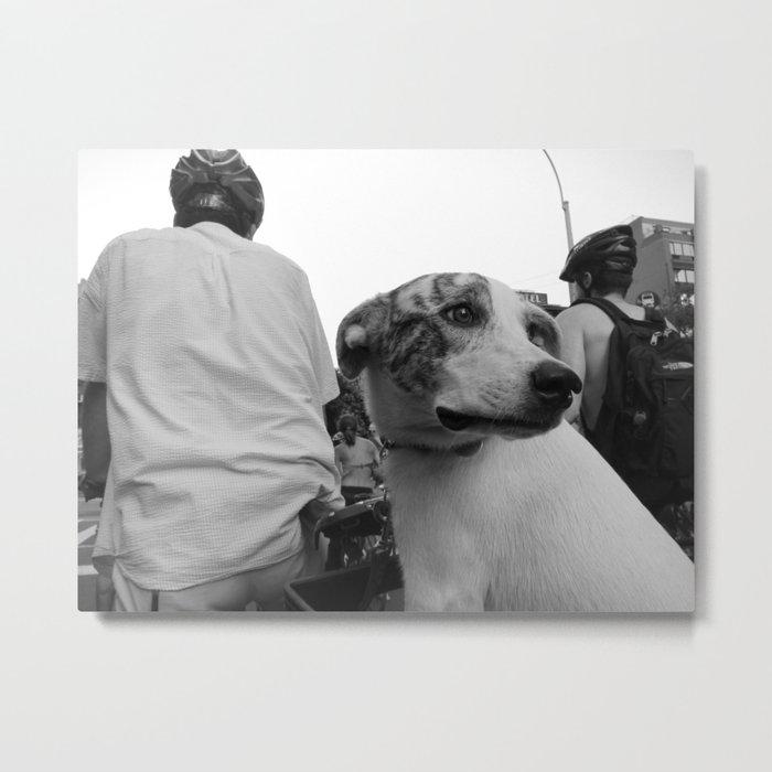 Dog on Wheels Metal Print