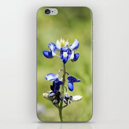 Last of the Bluebonnets iPhone Skin
