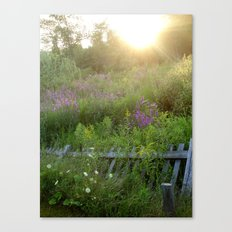 August coming undone Canvas Print