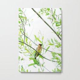 Cedar Waxwing Metal Print