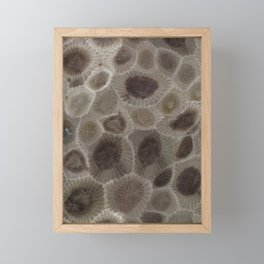Petoskey Stone Framed Mini Art Print