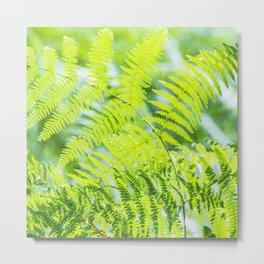 Green plants lit by the sun Metal Print