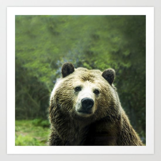 Big Brown Bear Grizzly Wildlife Forest Art Print
