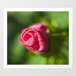 Cheddar Pink Dianthus Art Print