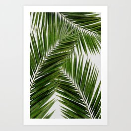 Palm Leaf III Art Print