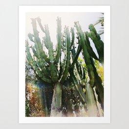 Cactus Desert Photography Art Print