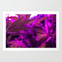 cannabis Art Prints featuring Cannabis  by End Of Prohibition