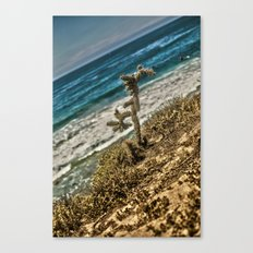 The Lonely Golden Cactus. Canvas Print