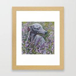 Italian Greyhound dog art from an original painting by L.A.Shepard Gerahmter Kunstdruck