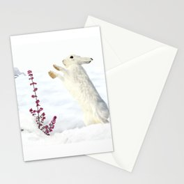 White rabbits dancing around red erica in snow mountain. Stationery Cards