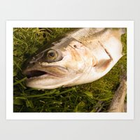 trout Art Prints featuring Trout by Shaun Drew