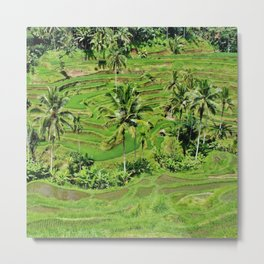 Greenery paddy fields rice crops Metal Print