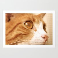 My cat Art Print