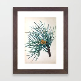 """The Stone Pine, from """"The Spirit of the Woods,"""" 1849 (benefiting the Arbor Day Foundation) Framed Art Print"""