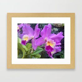 Purple and yellow orchids Framed Art Print