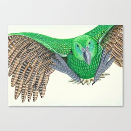 Kakapo in flight Canvas Print