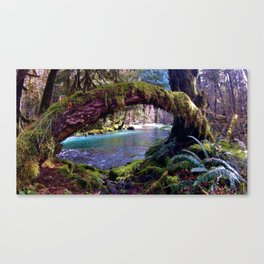 Colors of the Quinault Canvas Print