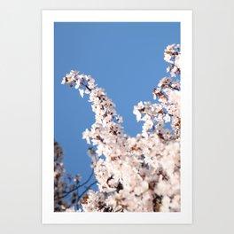 Blossom Sky Art Print
