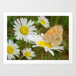 Butterfly :: Rings of Gold Art Print
