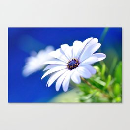 Happy White Daisy  by Kaye Menner Canvas Print