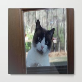 Meow! Is Anybody In There? Metal Print