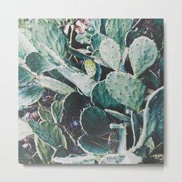 Wild cactus Metal Print
