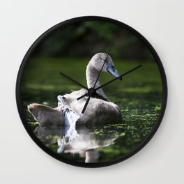 Mute Swan Cygnet Wall Clock