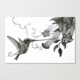 Swordbill Hummingbird Canvas Print