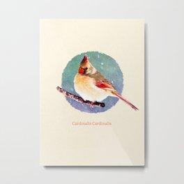 Cardinalis Cardinalis Metal Print