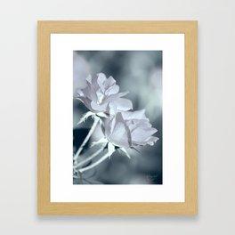Twin White Roses Framed Art Print