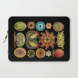 Ernst Haeckel - Scientific Illustration - Ascidiae Laptop Sleeve