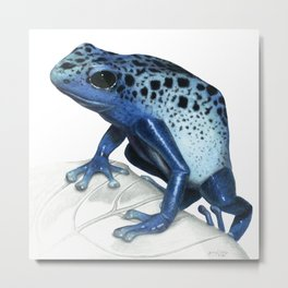 Blue Poison-Dart Frog Educational Layout Metal Print