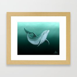 """Riversoul"" by Amber Marine ~ Indian River Lagoon bottlenose dolphin art, (Copyright 2014) Framed Art Print"