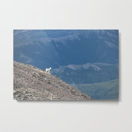Baby Goat Metal Print