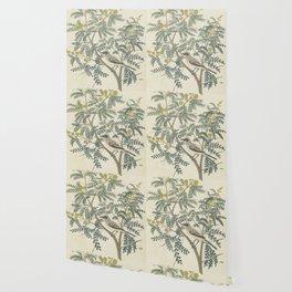 Robert Jacob Gordon - Acacia karroo Hayne or Vachellia karroo - 1777-1786 Wallpaper