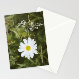 Flower. Oxeye Daisy (Leucanthemum vulgare) growing wild. Stationery Cards