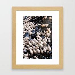 Beach Texture - Barnacles Framed Art Print